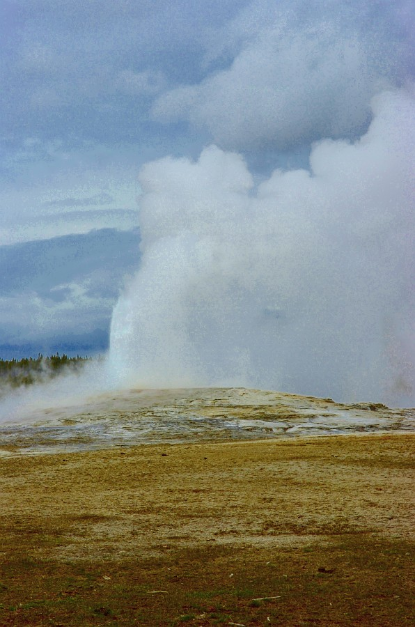 Old Faithful Erupts